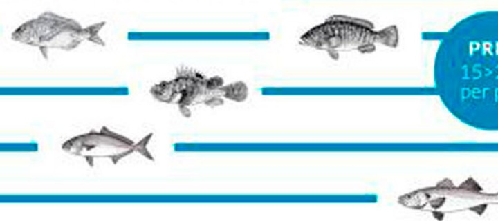 Jornades del Peix de Menorca